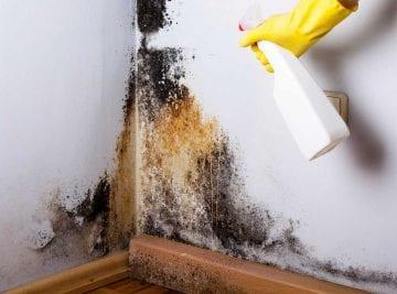 Muffa in un angolo della casa e rimozione con spray